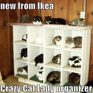 max_400_best-cat-memes-funny-cat-memes